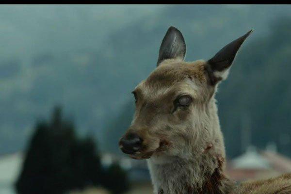 丧尸鹿病毒会感染人类吗 是否会出现不正常传染